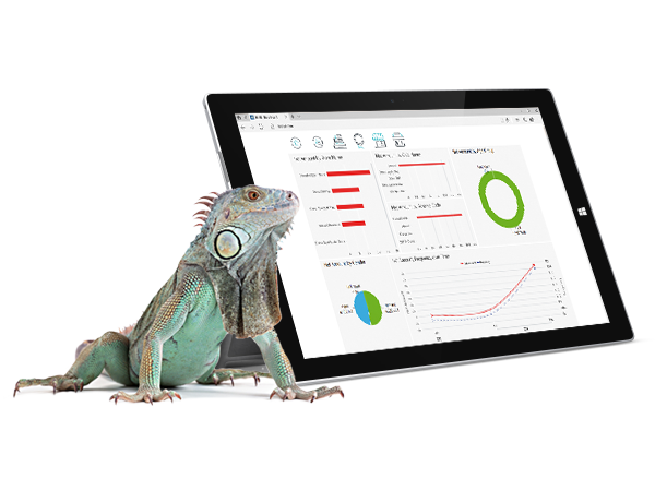 FT-industry-pet store-offers and campaigns management-LS BI-tablet-lizard-iguana